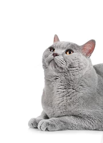 cat-cut-2