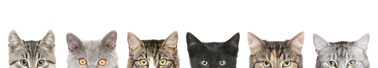 cats-looks